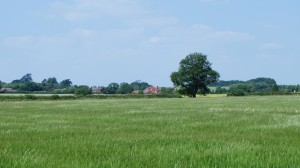 Moulsoe Oak with Carrington Arms Jul13